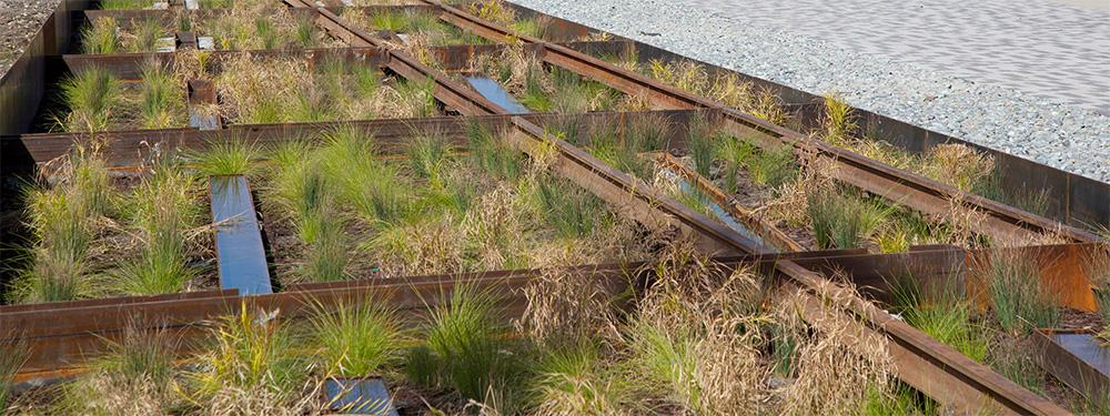 Image of rain garden underneath historic railroad tracks, which doubles as a stormwater treatment facility.